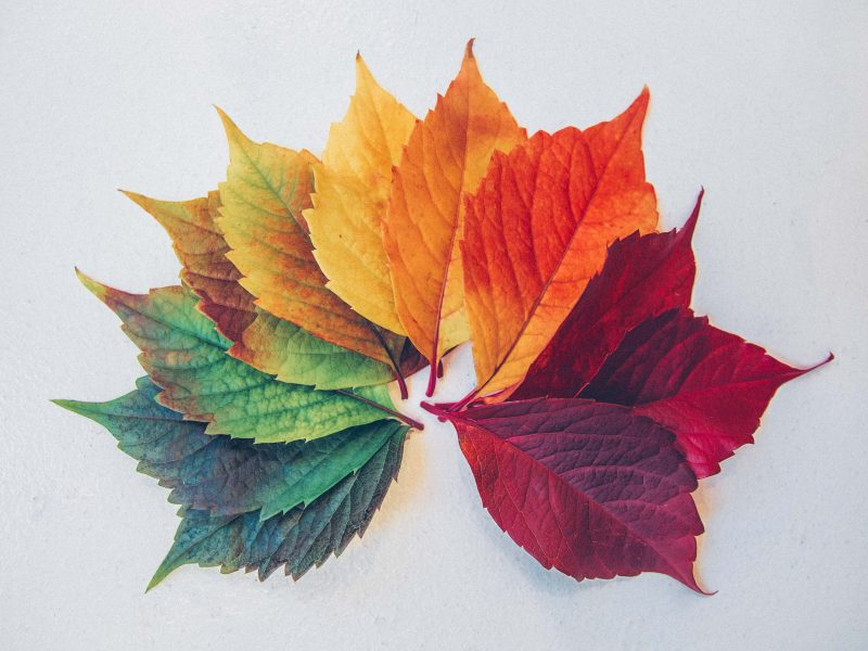 several leaves of the same kind but with different colours