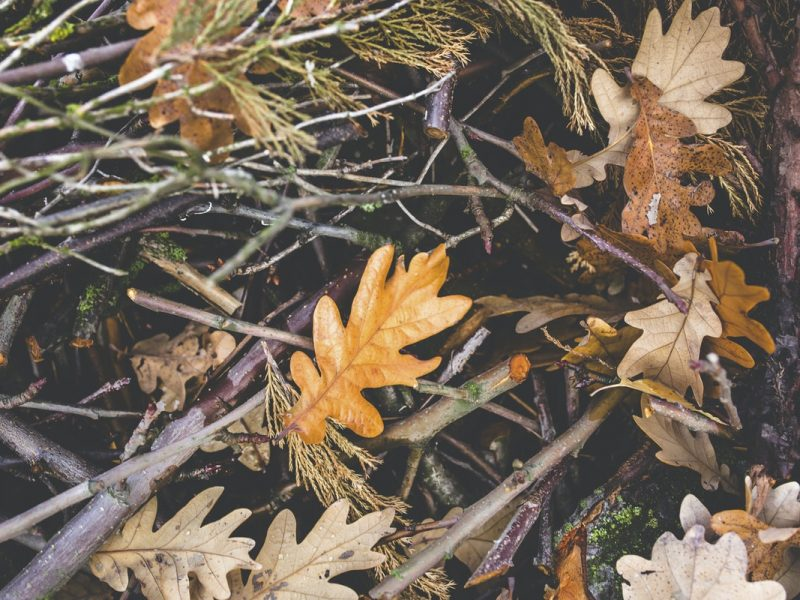 close up of dried leaves